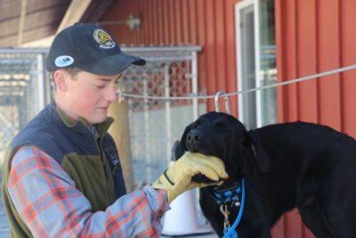 Black Lab Hunting Dog Training