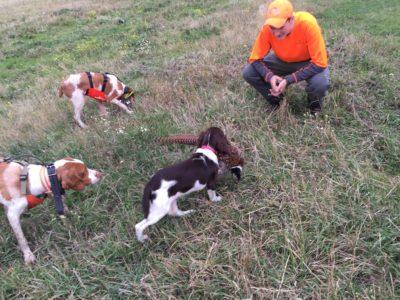 big sky bird dogs training